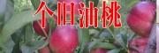 红河油桃批发价格