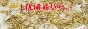 黄草乌图片/报价(回收公司)