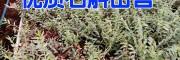 建水铁皮石斛报种植户报价400-6633-626