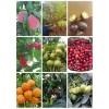 果树苗·海棠种子销售%海棠种子播种技术