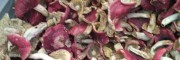 优质大红菌中药材图片