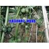 云南/贵州滇黄精销售厂家批发[:087164155848]|文山滇重楼种子/种苗批发