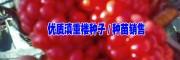 文山重楼种子(图片)