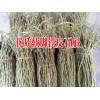 贵州铁皮石斛 种植销售价格|  云南铁皮石斛