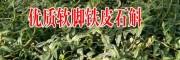 云南铁皮石斛种植户|四川软脚铁皮石斛|