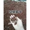 曲靖师宗县哪里有草果种子(种苗)出售