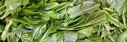 银溪牌绿茶,普洱茶