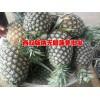 昆明附近菠萝价格行情@(无眼菠萝)销售市场报价