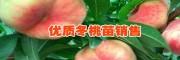 云南一亩冬桃产量分析