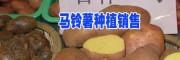 云南马铃薯行情价格