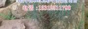 红豆杉袋子(12X13)出售