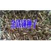 金铁锁种子几年能采收@云南独定子种子新价格420