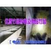 云南养殖竹鼠投资多少钱&竹鼠养殖场有种苗出售