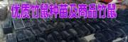 2017竹鼠(中华品种)