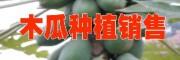 云南特色水果网 