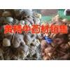 黄精价格@ 黄精的价格# 黄精中药材种子# 黄精小苗& 黄精种苗