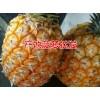 无眼菠萝*菠萝批发&优质无眼菠萝种植基地直销