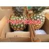云南菠萝批发市场报价&采购菠萝供应商信息
