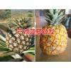 无眼菠萝新品种&*景洪哪里有菠萝&销售市场报价