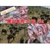 云南东川哪里有黑山羊种羊@黑山羊购买@黑山羊市场价