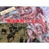 昆明晋宁/富民/嵩明黑山羊价格多少钱一斤&今日黑山羊价格