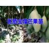 云南核桃苗供求信息(13987208148 )| 普洱附近哪里有卖核桃树苗的|