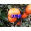 沃柑苗哪里有卖(云南)适合云南种植的沃柑苗