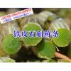 鲜条铁皮石斛怎么吃@铁皮石斛盆栽种植方法#