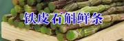 2017德宏州鲜条铁皮石斛批发