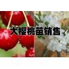 樱桃树苗栽培技术@樱桃树苗哪里的好?雷先生13887043679