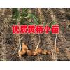 2017中药材黄精价格#中药黄精多少钱一斤