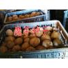 今年魔芋收购价优质魔芋收购公司信息#魔芋种子批发
