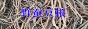 野蚕豆根图片