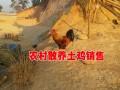 临沧/保山/红河/昆明散养土鸡销售点