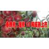 油桃几月份成熟#油桃种植户13987340512  刘先生