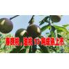 云南油桃种植基地批发信息@13987340512  刘先生