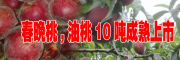 优质春晚桃(附图)