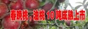 2017春晚桃油桃品种{ 0871-64155848刘先生}