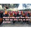 云南最新毛脚鸡图片销售中心同发禽业135770342