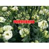 个旧市益农农业发展公司产品供应信息18087383888