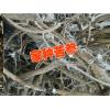 贵州什么中药材最贵苦参种子价格#苦参种子多少钱一斤?