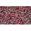 昆明金边玫瑰花供应商◆ 昆明禄劝金边玫瑰花◆