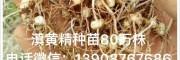 求购白芨#白芨价格#白芨种植技术