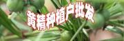 @黄精价格&黄精价格多少钱一斤