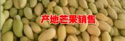2017鹰嘴芒果多少钱一斤