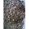 弥勒市中药材种植合作社出售金铁锁独定子种子产品回收