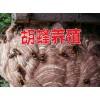 云南胡蜂养殖培训#云南宣威胡蜂移巢技术15288058995