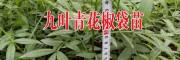 禄丰县勤丰镇苑箐苗木种植园产品供求信息