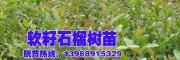 西南较大的软籽石榴基地在哪里?-会泽高老庄农业庄园公司