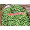 云南哪里有苦茄卖|苦子树图片|苦子果是什么-广南县坝美那力苦子果种植基地